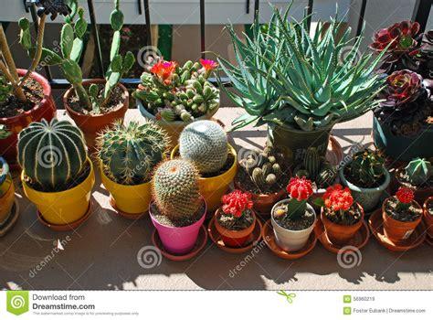 comment entretenir un cactus en pot jardin mis en pot de cactus sur un passage couvert niveau tri de b 226 timent de logement photo