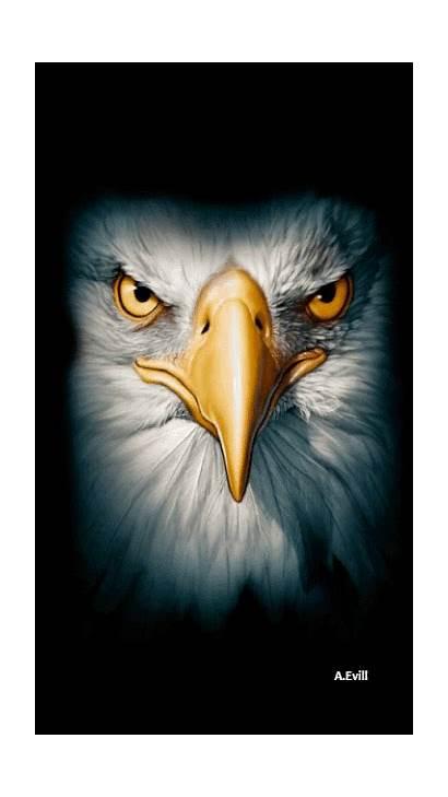 Eagle Eagles Gifs Face Bald Owl Birds