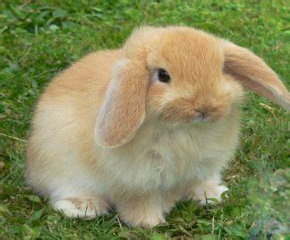 alimentazione dei conigli alimentazione coniglio nano