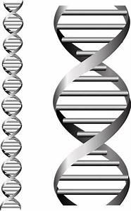 DNA Free vector in Adobe Illustrator ai ( .AI ...
