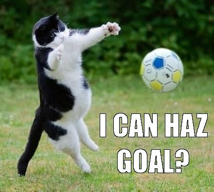 Football Cat Meme - soccer maze and sporty cats for mobile casino image 3404488 by yanito on favim com