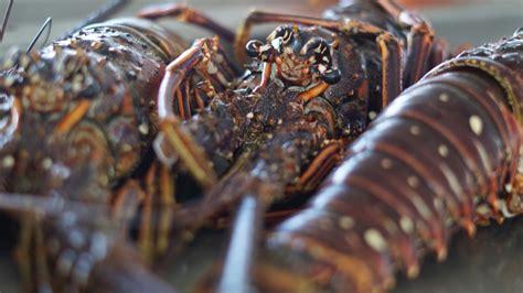 cuisiner espadon marché aux poissons de baille argent insolite guadeloupe