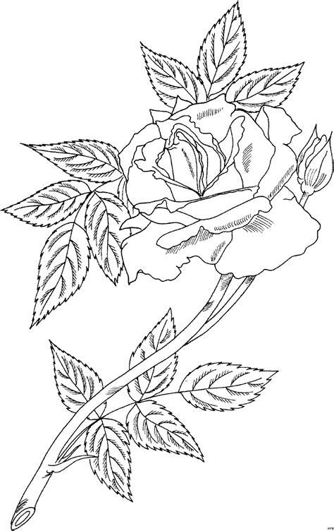 prophyta mit blaettern ausmalbild malvorlage blumen
