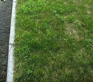 Traitement Mauvaise Herbe : traitement de la digitaire et de l 39 oxalide sur la rive sud ~ Melissatoandfro.com Idées de Décoration