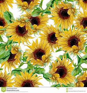 Pattern With Yellow Sunflowers Painted In Watercolor On A ...