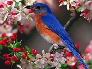 Bleu Et Orange : oiseau bleu et orange ~ Nature-et-papiers.com Idées de Décoration