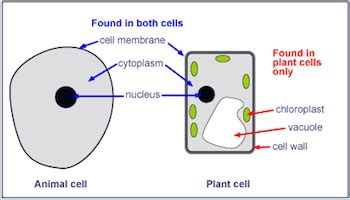 difference  plant  animal cells video