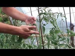 Comment Tuteurer Les Tomates : comment tuteurer les tomates et reconnaitre les gourmands ~ Melissatoandfro.com Idées de Décoration