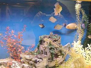 Feng Shui Tips  Location Of A Fish Tank At Home