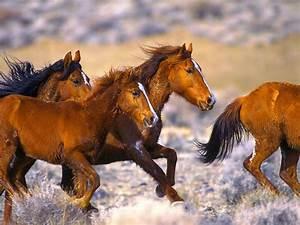 Boxspringbett 1 20 M : fonds d 39 cran cheval gratuit fond d 39 cran hd ~ Bigdaddyawards.com Haus und Dekorationen