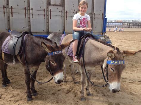 donkeys  sand sculptures  weston super mare