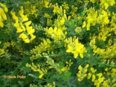 bloemen geel lange steel tuin mei tuin kalender het hele jaar door een tuin met bloemen