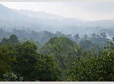 Tropical Rainforest — kidcyber