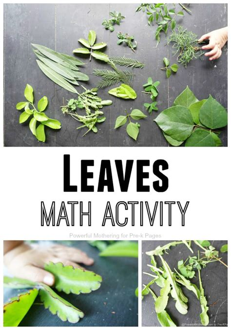 leaves nature math activity for preschool 148   leaves math activity pin