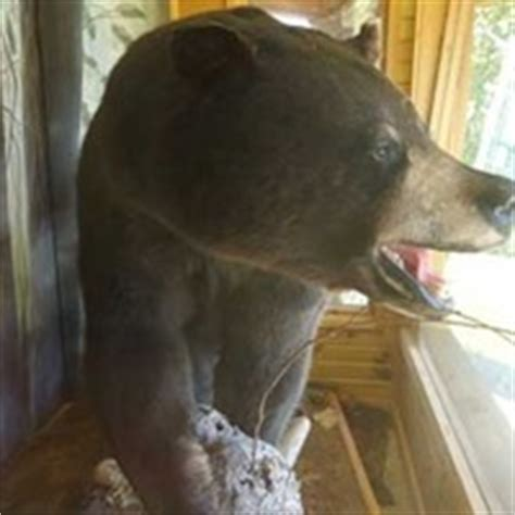 glidden wi  lb world record stuffed bear