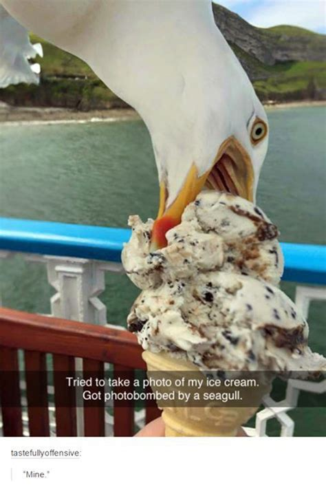 bird memes quotes  humor