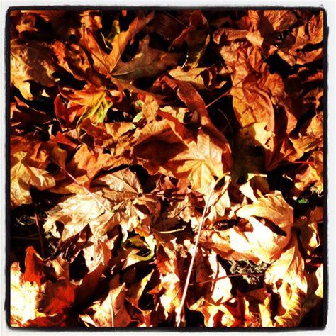 Fall Leaves | Mariska Richters | Autumn leaves, Fall, Leaves