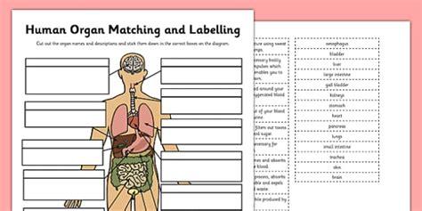 human organ matching  labelling activity teacher