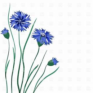 Cornflowers clipart - Clipground
