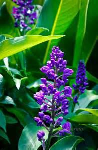 Hawaiian Tropical Flowers and Plants