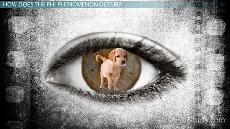 phi phenomenon definition  video lesson