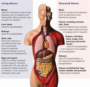 Quotes About Body Organs  58 Quotes