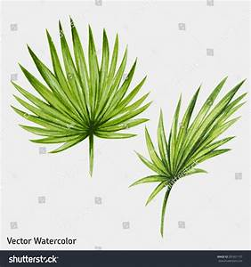 Watercolor Tropical Palm Leaves. Vector Illustration ...