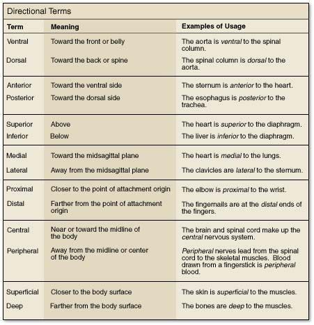 position  directional terms   anatomy google