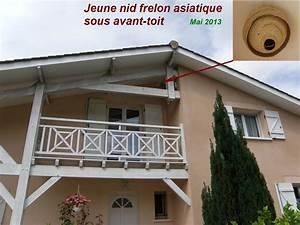 Nid De Guepe Dans Le Toit : jeune nid de frelon asiatique sous avant toit la landaise le blog de jp33 ~ Medecine-chirurgie-esthetiques.com Avis de Voitures