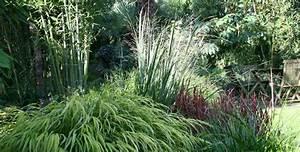Alternative Zu Gras Garten : gr ser in gro er auswahl direkt in der baumschule kaufen ~ Markanthonyermac.com Haus und Dekorationen