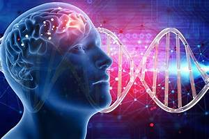 Found: more than 500 genes that are linked to intelligence ...