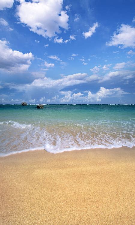 Sandy Beach Backdrop Photo Pie