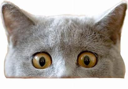 Cat Peeking Funnycat Picsart