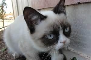 grumpy cat news and entertainment grumpy cat jan 09 2013 17 13 35