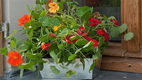 fleurs dans une chambre que planter dans ses jardinières d été