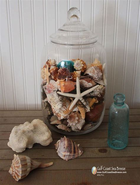 how to display shells ideas shell display decorating ideas pinterest