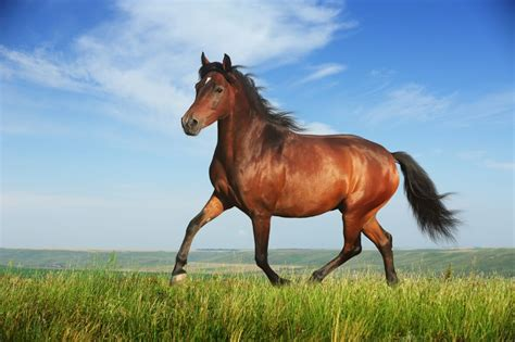 horse meaning dream symbol word symbolism