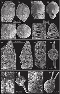 Scanning Electron Microscope  Sem  Images Of Radiolarians