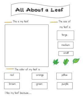 leaf exploration worksheet school
