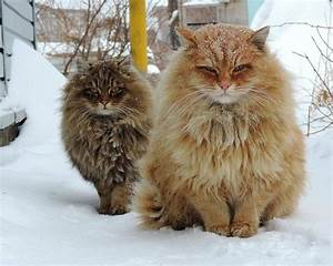 10+ Of The Most Beautiful Cats In The World | Bored Panda
