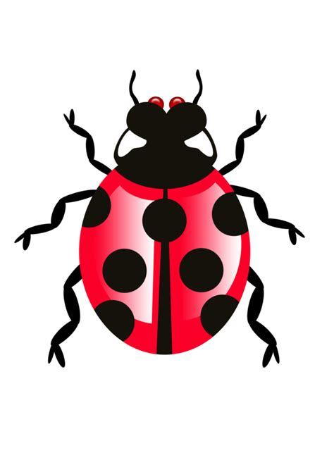 Qoi's Bug  Png File By Qoiqoistock On Deviantart