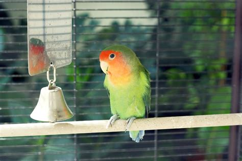 keeping pet birds in a safe environment pets4homes