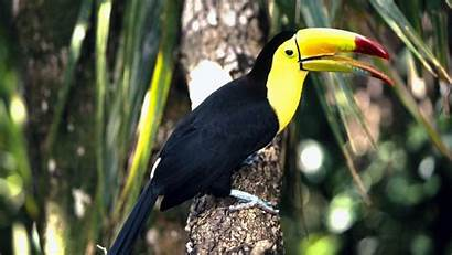 Birds Trees Nature Wallpapers Definition Updated Views