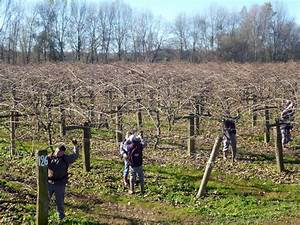 Tailler Les Kiwis : un prestataire de services aupr s des agriculteurs le blog de tookets ~ Farleysfitness.com Idées de Décoration