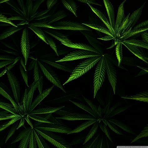 weed wallpapers  android gallery