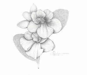 25 best VIOLET DRAWINGS images on Pinterest | Violets ...