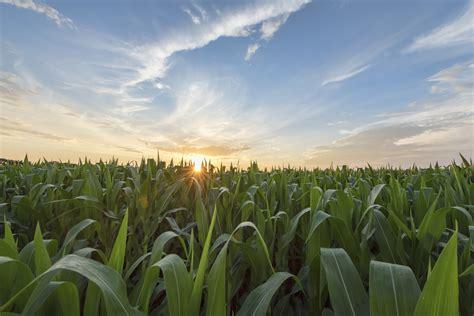 grow worlds largest food crops fertilizer