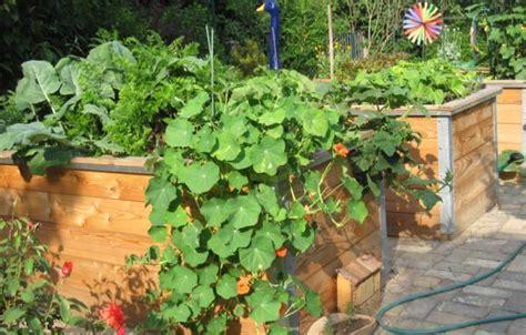 Hochbeet Im Garten by Hochbeet Bauen F 252 R Ihren Bio Garten