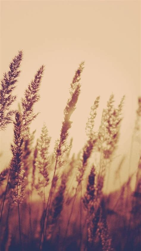 nature aesthetic reed plant field blur iphone  wallpaper