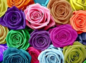 All 4u HD Wallpaper Free Download : Rainbow Flowers ...